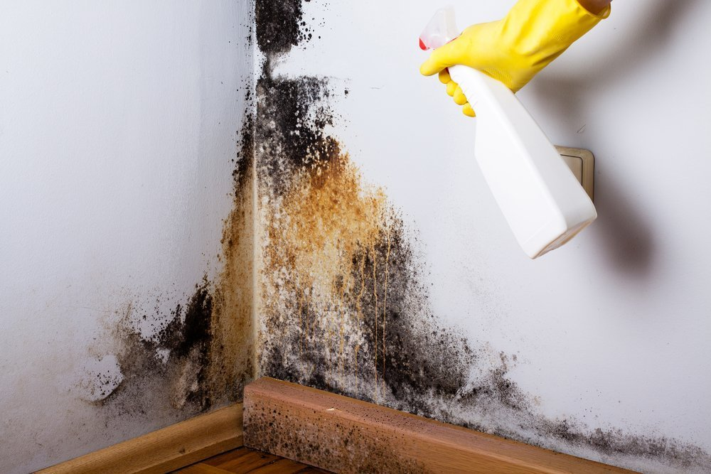 asthma from allergies to mould